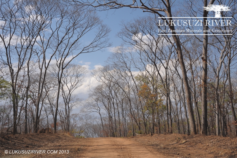 16-16 mine: The mine is situated deep in a forest with large trees - a beautiful area even in the dry season.